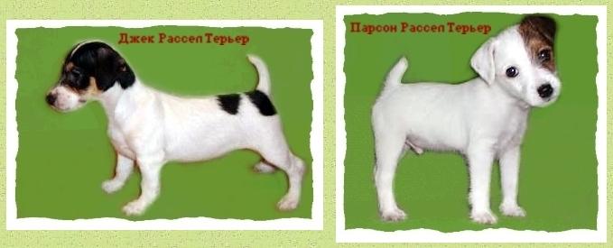 Лена миро фото до и после похудения